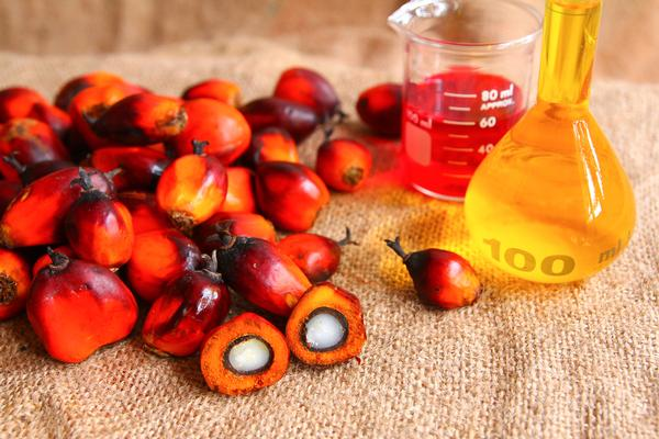 Palm oil and steam